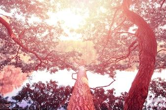 Champ neigeux vu d'un arbre