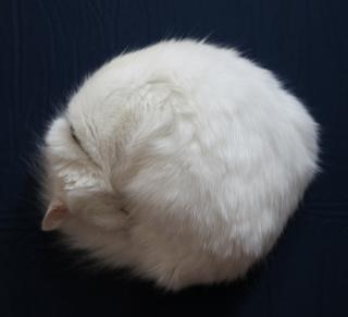 Chat rond