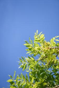 Ciel et feuilles