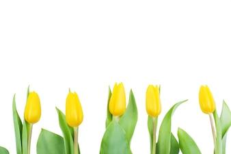 Cinq tulipes en ligne