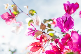 Close-up de brindilles et de feuilles avec des fleurs