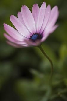 Close-up de fleurs fraîches violet