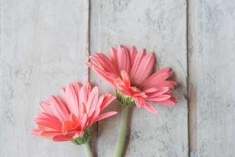 Close-up de fleurs roses sur des planches en bois