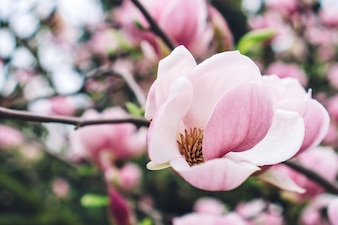 Close-up de la fleur rose