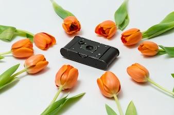 Close-up de tulipes autour d'un appareil photo vintage