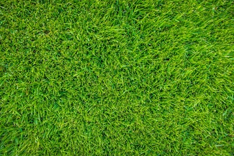 Close-up image de source fraîche herbe verte.