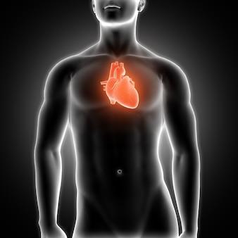 Coeur avec des rayons X