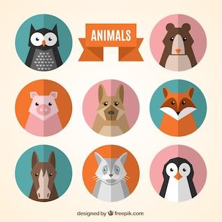 collecte des avatars des animaux