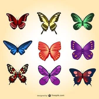 Papillons colorés fixés