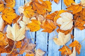 Contexte d'automne.