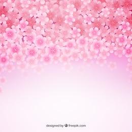 Contexte de fleurs de cerisiers