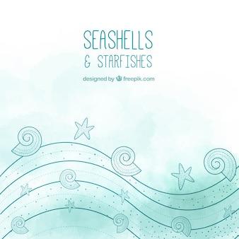 Coquillages et étoiles de mer