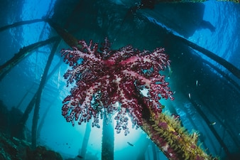 Corail rose sous le port