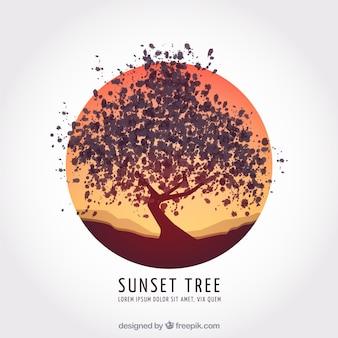 Coucher de soleil arbre