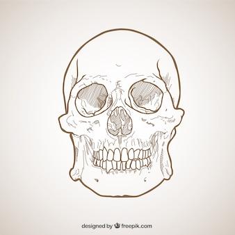Crâne Sketchy