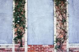 Creeper sur un mur de briques