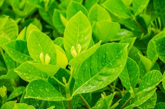 Croissance herbe nature environnement feuille