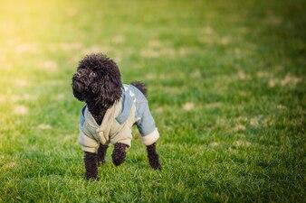 Des chiens de compagnie heureux jouent sur Grass dans un parc.