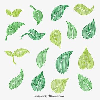 Dessinés à la main des feuilles vertes