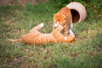 Deux chatons rouges