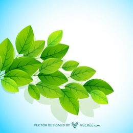 Eco Friendly Leaves Background