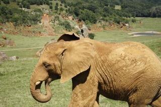 Parc Naturel de CABARCENO (Espagne) - Forum Actu Zoo