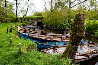 Faune killarney paysage bateaux destination automne