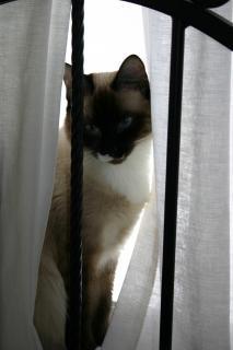 Fenêtre de chat fenêtre