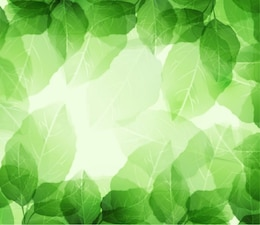 Feuilles vertes et transparents sur le fond