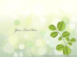 Feuilles vertes sur fond clair