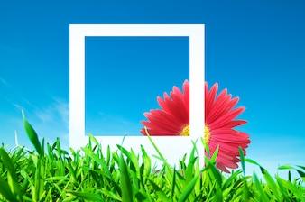 Fleur avec un cadre photo en plein air