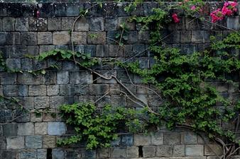Fleur de murs à haute résolution photo stockée