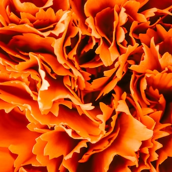 Fleur rouge carnation