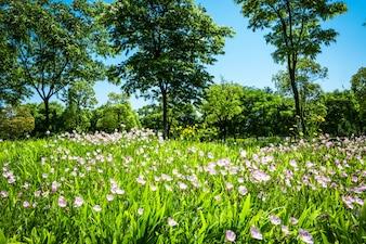 Fleurs dans le parc