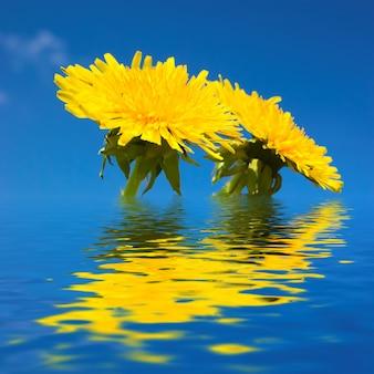 Fleurs jaunes dans l'eau