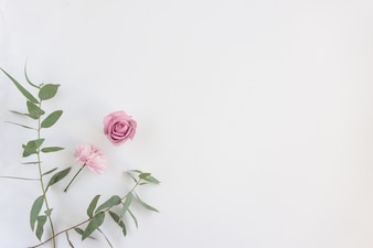Fleurs roses et feuilles vertes sur la surface blanche