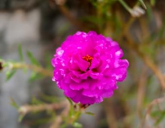 Fleurs sauvages feuille fleur de beauté d'été