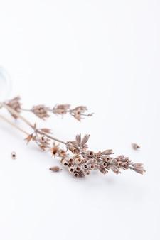 Fleurs séchées close up