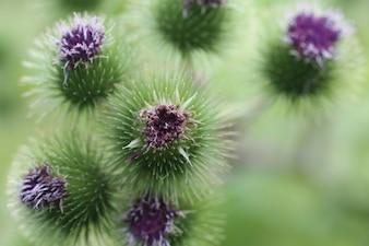 Fleurs violettes tas