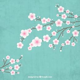 floraison cerisier branche
