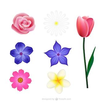 Collection Fleurs