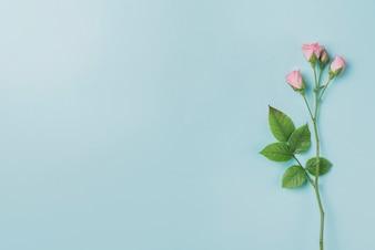 Fond bleu avec des fleurs roses et espace pour les messages