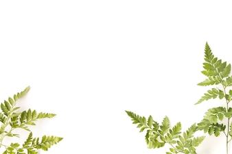 Fond de feuilles tropicales avec espace de copie