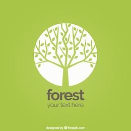 fond de la forêt
