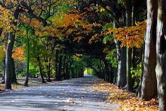 Forêt séparés par une route