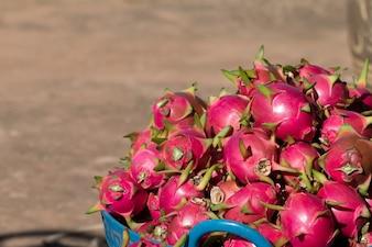 Fruit du Dragon Rouge ou Pitahaya à la ferme