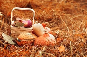 Fruits et légumes colorés d'automne
