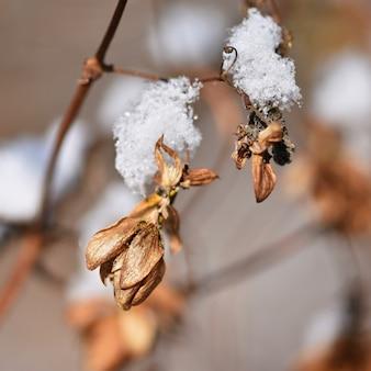 Givre et neige sur les branches. Beau fond saisonnier d'hiver. Belle nature.