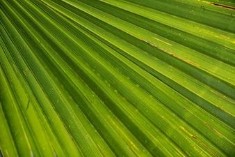 Lignes vertes