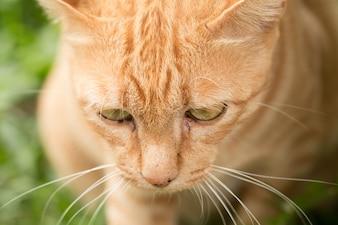 Gros plan de chat jaune mignon rester sur l'extérieur